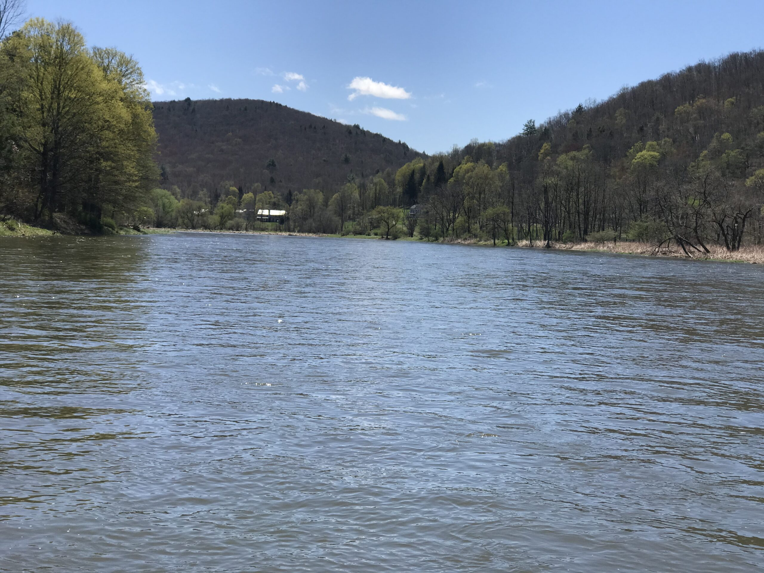 One Bug: A day on the Delaware