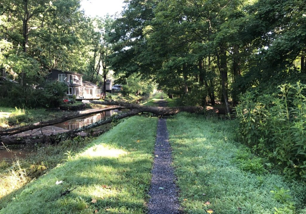 A tree lies across the Delaware Canal after Tropical Storm Isaias. PHOTO BY DCNR STAFF