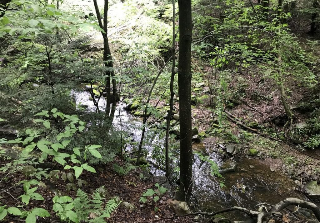 Tank Creek,  one of six Pocono streams that could be classified as Exceptional Value. PHOTO BY MEG MCGUIRE